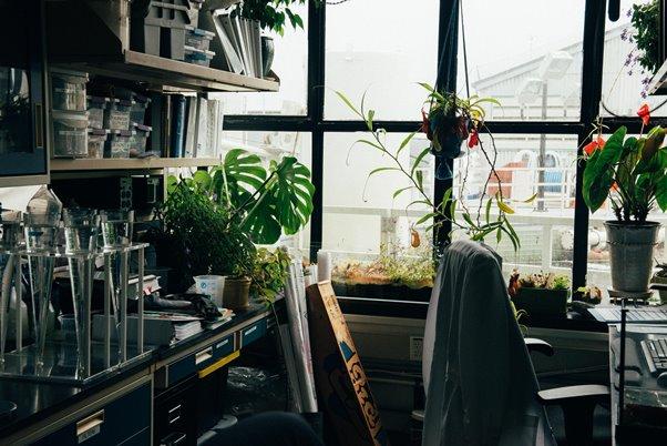 Welche Pflanzen eignen sich fürs Büro?